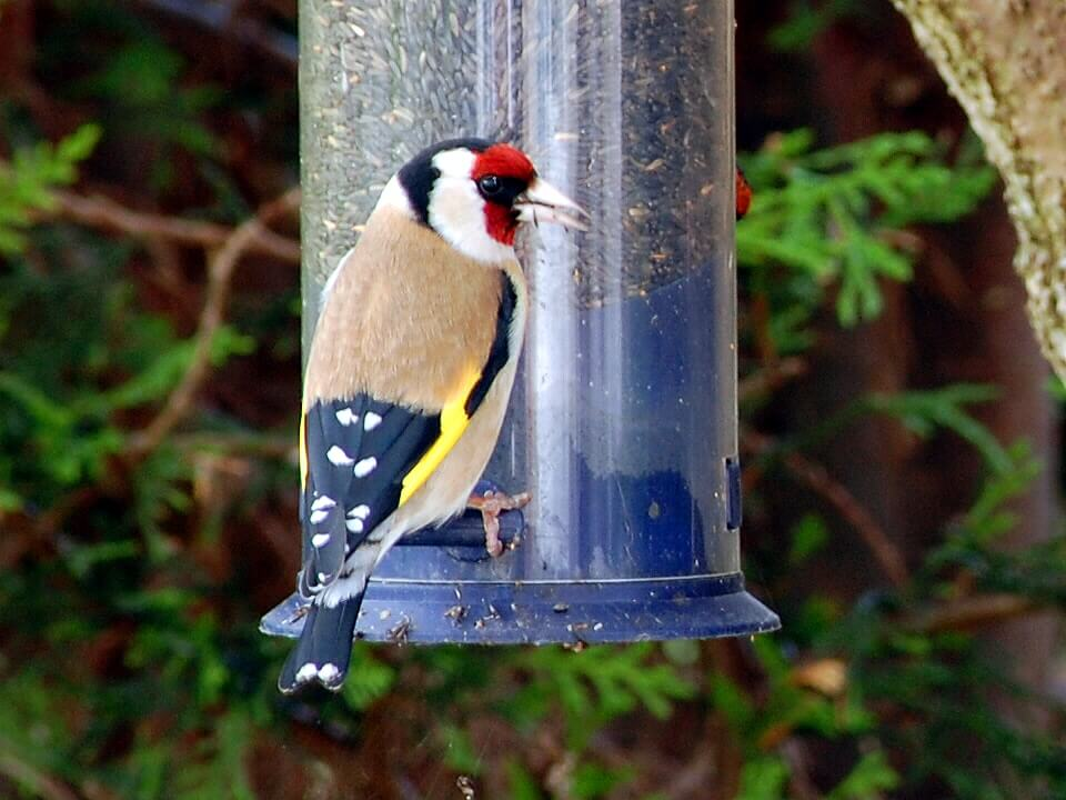 what colors are birds attracted to Birds are attuned to color, you can use it in your yard creatively while attracting birds.