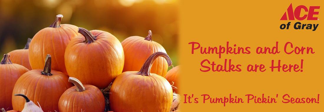 Pumpkins and Corn Stalks