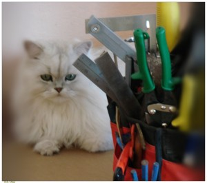 cat and toolbox