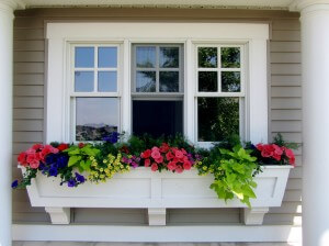 window box - flowers and succulents