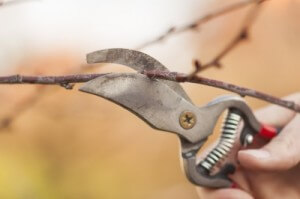 pruning tree branches