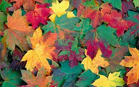 Why The Leaves Change Colors In The Fall