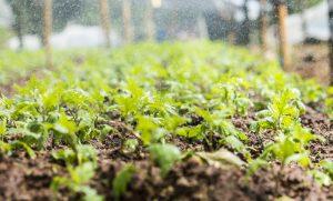organic garden sprinkler