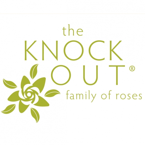 The Knock Out